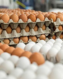 Stacks of eggs in cartons awaiting the washing process