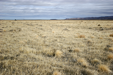 The Nevada research site before the study began shows cheatgrass completely dominating the landscape.