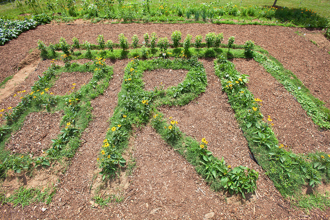 Black-eyed Susan and mountain mint plants outline the letters BRL in the Pollinator Garden