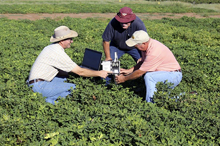 Three scientists working with equipment in a peanut field