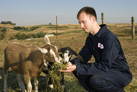ARS geneticist Stephen White examines a goat.