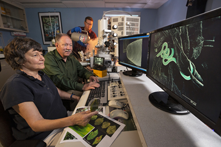 Three scientists looking at an image of a wormlike nematode on a computer screen