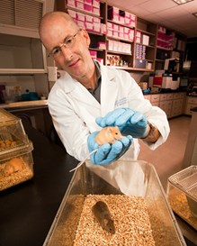 Molecular geneticist Robert Waterland examining two mice in the lab.