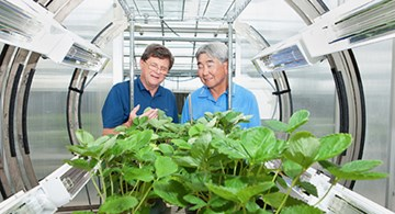 Scientists observe strawberry plants in the PhylloLux system in the greenhouse.