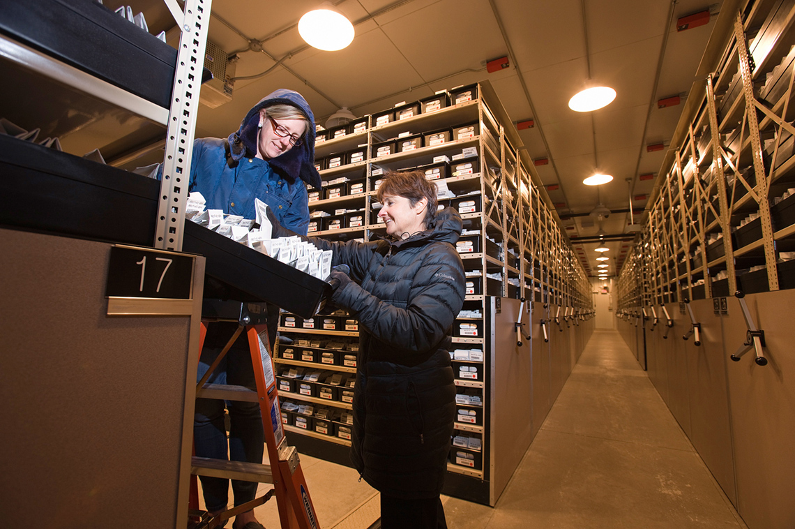 Two ARS scientists examine seed samples preserved in a cold vault