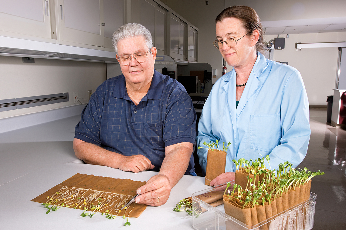 Two ARS seed analysts assess viability of soybean seeds