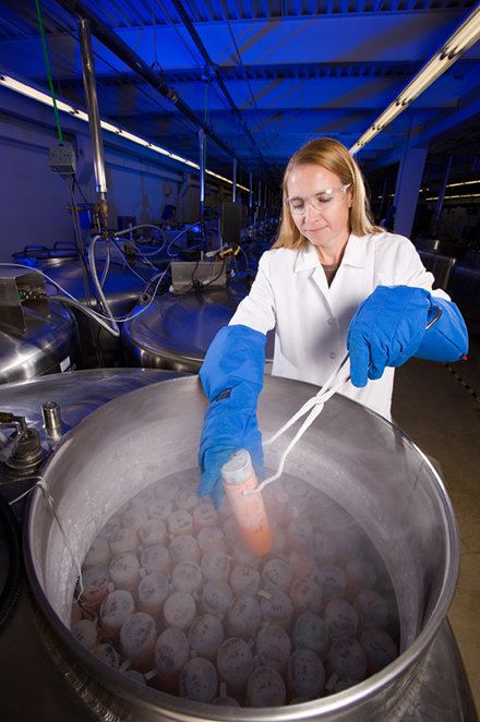 An ARS scientist retrieves germplasm samples from a liquid nitrogen tank