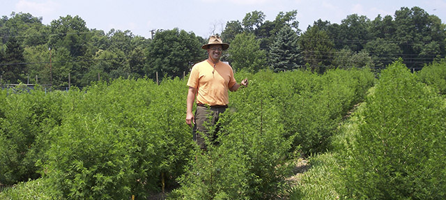 Jorge Ferreira in a field of Artemisia plants