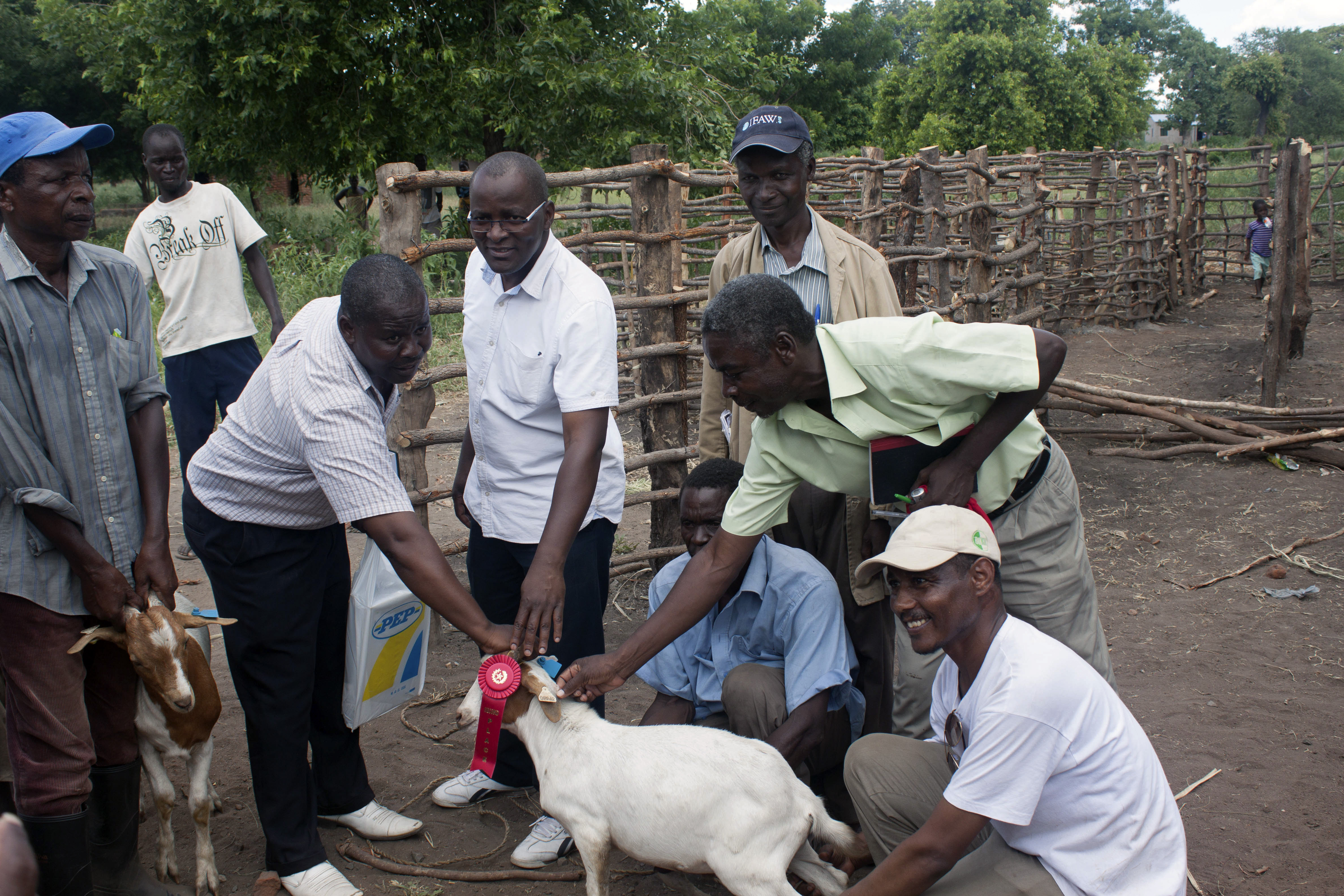 Members of the goat improvement project looking at a goat.