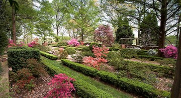 Garden with green boxwood shrubs, azaleas, and trees