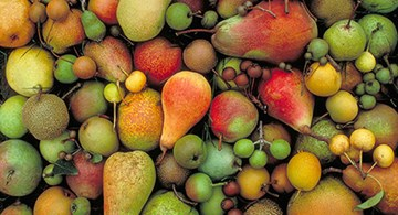 Pears, various sizes and color.