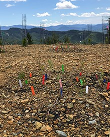 Experimental biochar-amended plots at the Formosa mine.
